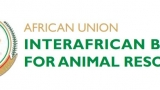 Logo for African Union Interafrican Bureau for Animal Resources