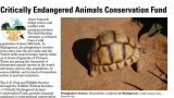 Screenshot of the Critically Endangered Animals Conservation Fund factsheet featuring a photo of a tortoise and some information about the fund.